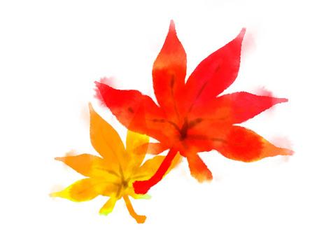水彩楓木楓葉