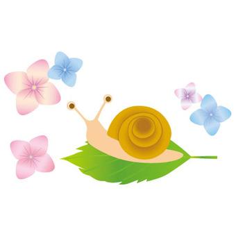 蝸牛和八仙花屬花