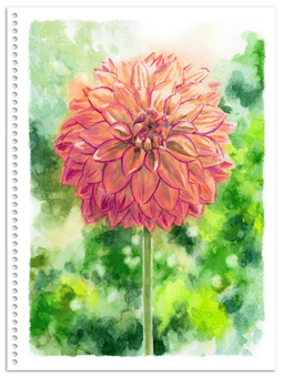 Analog watercolor pompom blooming dahlia pink