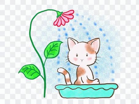 水浴びネコ3