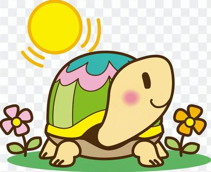 A sunny day turtle