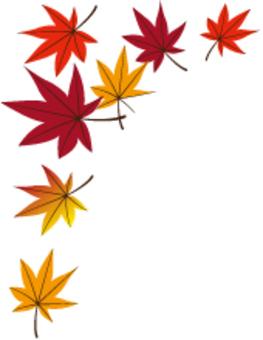 낙엽 13