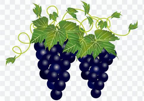 美味的葡萄14