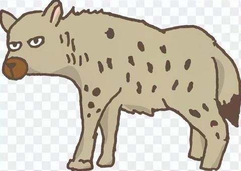 Hyena carnivore Africa zoo