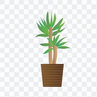 觀葉植物 - 青春之樹