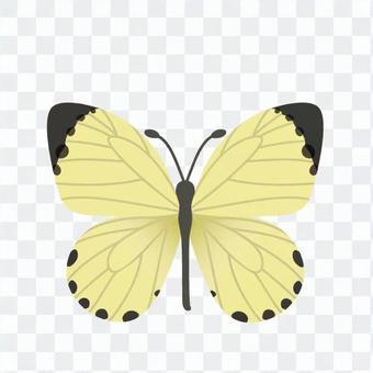 蝴蝶圖畫書