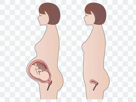妊娠時 非妊時 女性