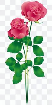 玫瑰花朵2