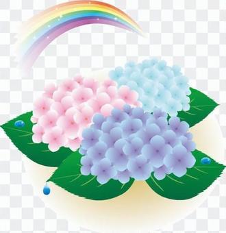 A hydrangea and a rainbow