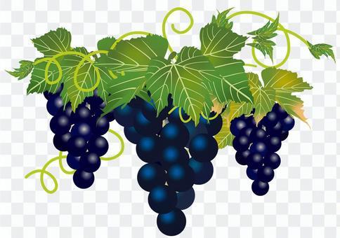 美味的葡萄20