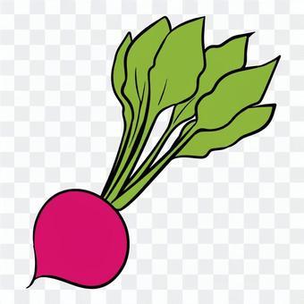 蘿蔔手寫插圖