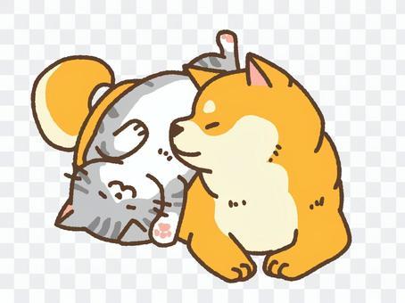 Shiba and Cat 2