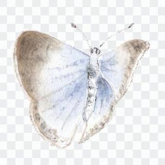 Butterfly 3 Yamato Shizimi