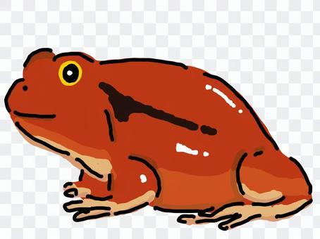 紅番茄青蛙