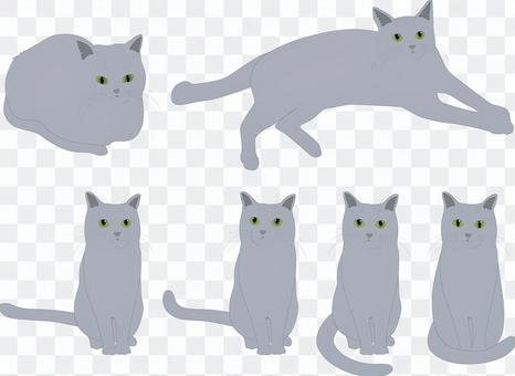動物貓(灰色)