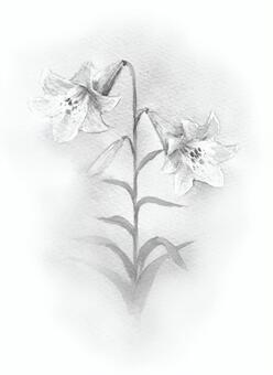 White lily white ink