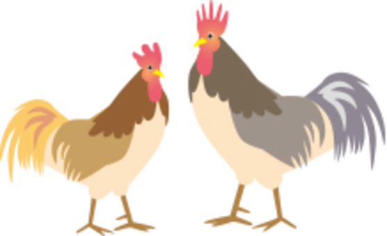 Chicken illustration
