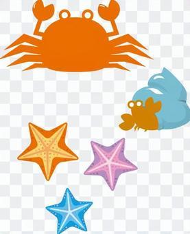 Crab, hermit crab, starfish