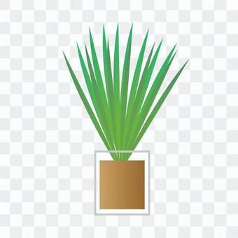 Houseplant - Small Areca palm