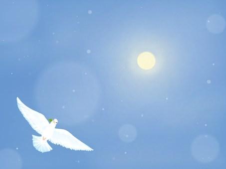 달과 비둘기 ☆