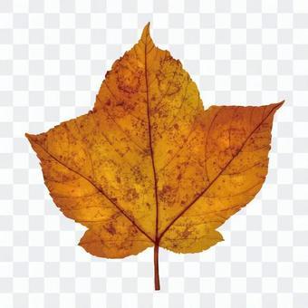 리얼한 잎