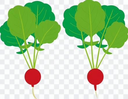 食品系列蔬菜蘿蔔