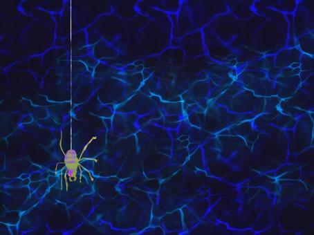 蜘蛛的螺紋蜘蛛陷阱