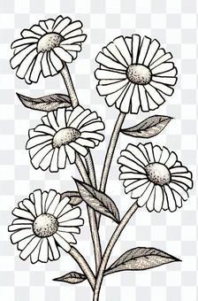 植物花卉瑪格麗特