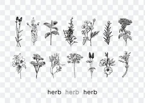 草藥的插圖