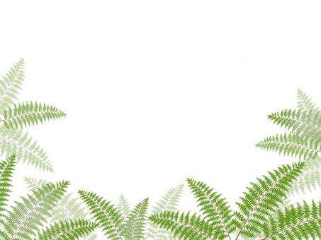 Pterophyta background