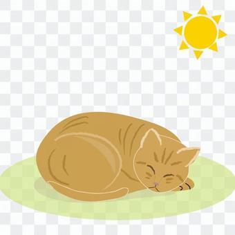 Cat Hinata Bokko