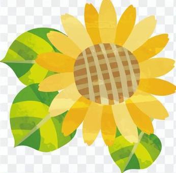 Flower (sunflower)
