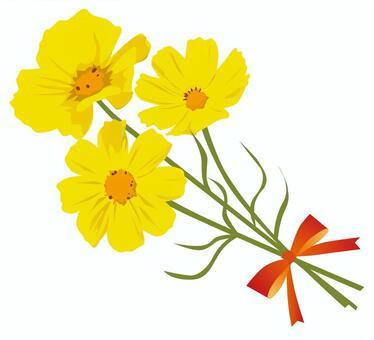 黃色的波斯菊花束