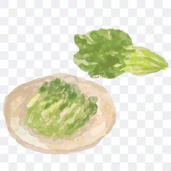 水彩風格野澤菜插圖