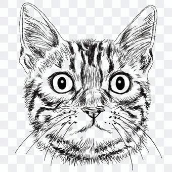 ベンガル・しま猫の顔/白黒手描きイラスト
