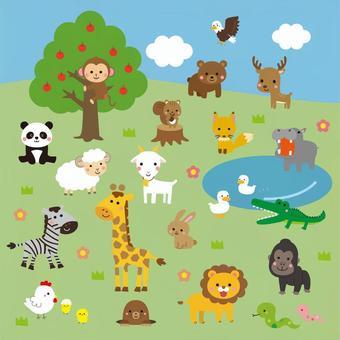 Animal Summary