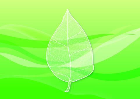 나뭇잎의 잎맥