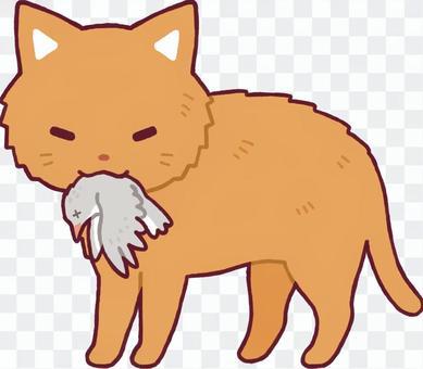 一隻小鳥的貓