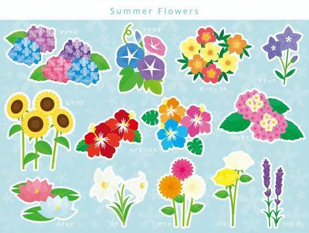 夏季花卉集