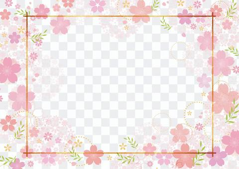 Cherry blossoms 362