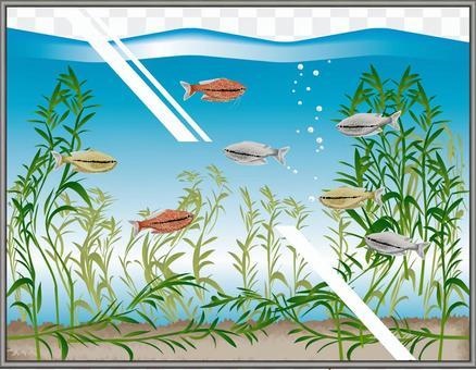 珍珠魚觀賞魚觀賞魚水族館