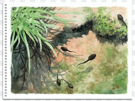 Analog watercolor landscape painting pond tadpole