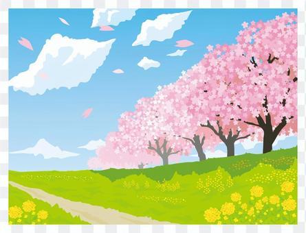 春天風景櫻花