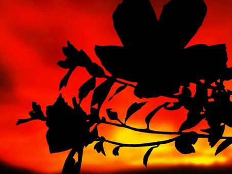 日落和芙蓉花