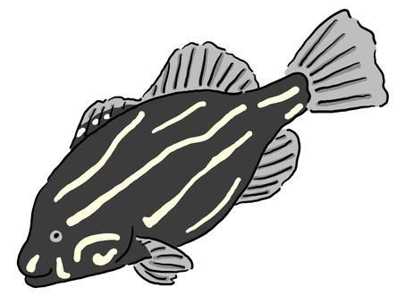 金條紋皂魚