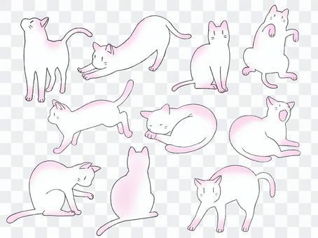 猫詰め合わせ10匹