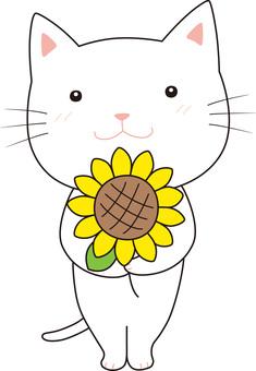 向日葵的貓