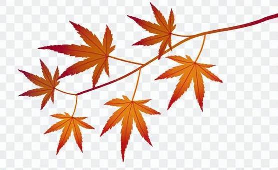 楓葉剪貼畫