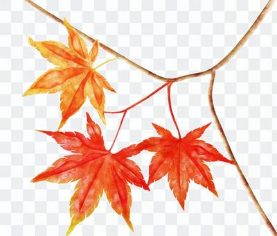 Astringent watercolor of autumn leaves
