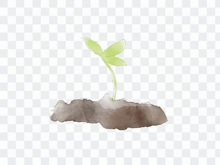 植物發芽水彩